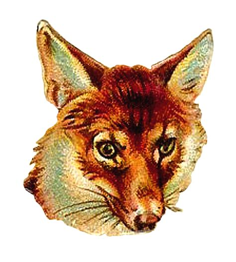 antique images digital fox clip art   animal