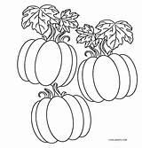 Pumpkin Coloring Pages Pumpkins Patch Cool2bkids Printable Print sketch template