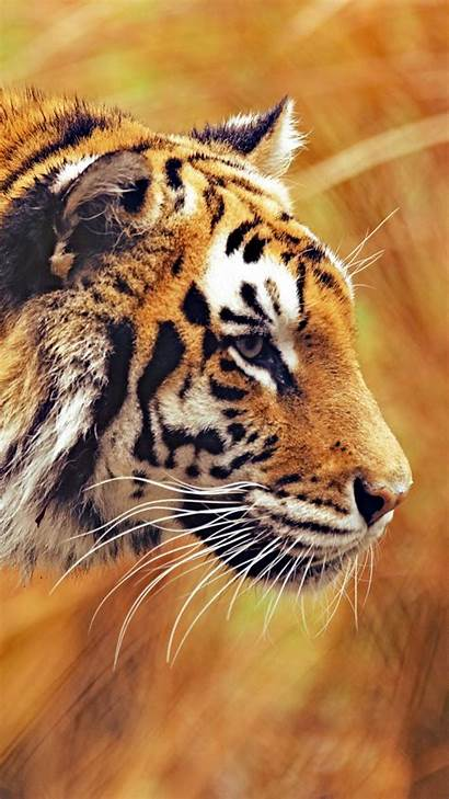 Wallpapers Mobile Tiger Phone Ultra Animals Wide