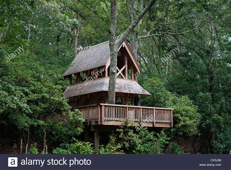 sandwich heritage museum tree house hidden hollow heritage museums and gardens sandwich stock photo royalty free