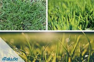 Klee Im Rasen Ursache : rasenkalk so kalken sie den rasen richtig ~ Frokenaadalensverden.com Haus und Dekorationen