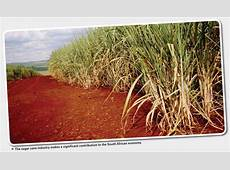 Biogas production potential for South African sugar cane