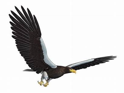 Eagle Sea Deviantart Transparent Burung Flying Transparan