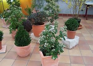 Große Winterharte Kübelpflanzen : blumen in nanopics zimmerpflanzen foto ~ Michelbontemps.com Haus und Dekorationen