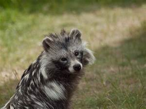 Baby Raccoon Dog | www.imgkid.com - The Image Kid Has It!