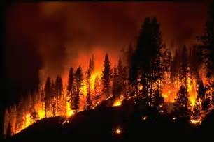 Image result for forrest fires