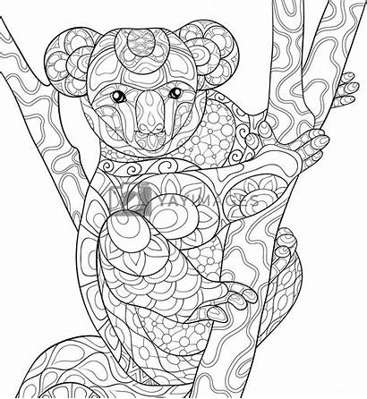 Coloring Koala Adult Bear Yayimages Brunch Terms