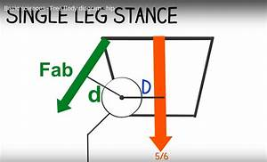 Free Body Diagram Of The Hip Joint  U2014 Orthopaedicprinciples Com