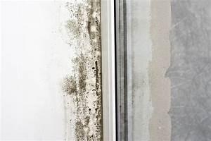 Weißer Schimmel Auf Holz Gefährlich : schimmel im kleiderschrank schimmel im schlafzimmer die sachverst ndige zeigt wo es schimmel ~ Eleganceandgraceweddings.com Haus und Dekorationen
