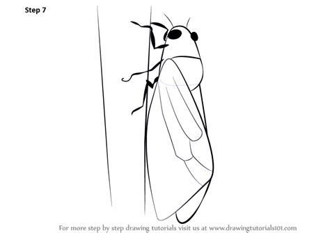learn   draw  cicada insects step  step