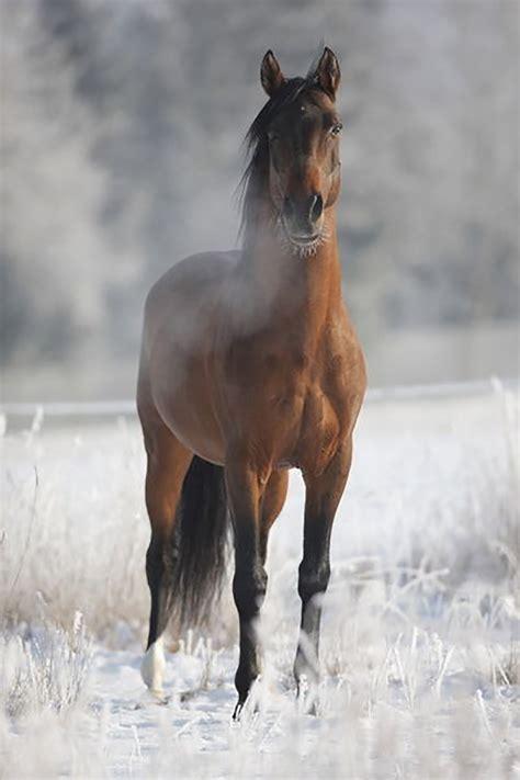 zirgs | Atklāj Gulbeni no jauna!