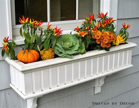 My Fall Window Boxes  Driven By Decor