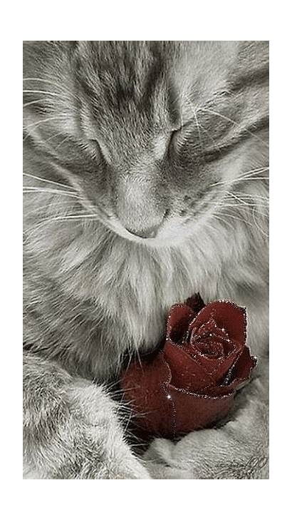 Cats Care2 Iveta Egyptian Cer Gifs Mau