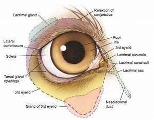 Eye Opener  Anatomy