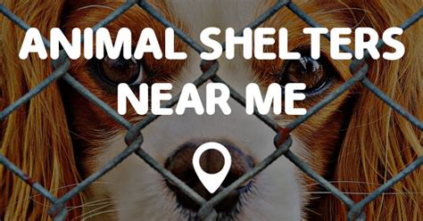 animal shelters   points