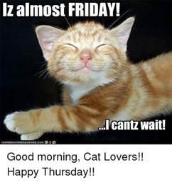 cat lover meme almost friday cantz wait morning cat happy
