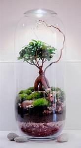 Terrarium Plante Deco : comment faire un terrarium humide en 8 tapes d tente jardin ~ Dode.kayakingforconservation.com Idées de Décoration