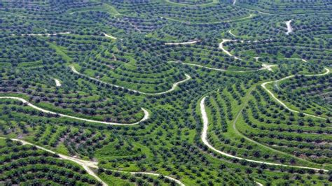 umweltschuetzer begruessen stopp fuer palmoel plantagen