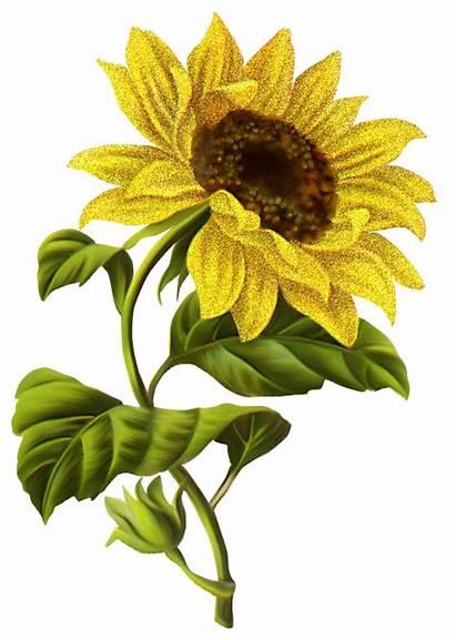 Illustration Sunflower Drawing Flores Zezete2 Sparad Centerblog