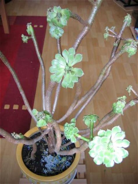 Wie Heißt Meine Zimmerpflanze by Hilfe Eingehende Zimmerpflanze Mein Sch 246 Ner Garten Forum