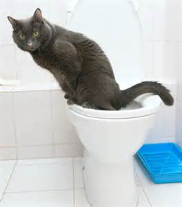 potty your cat cat to use toilet veterinarians seva call