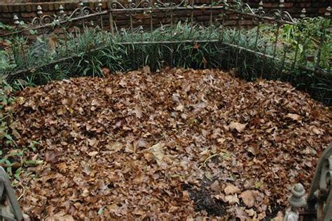 Organic Mulch-extension