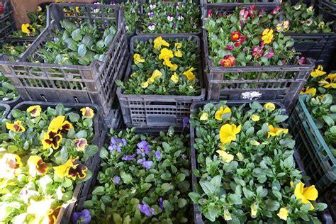 Puķes ziedošai Kuldīgai » Kuldīgas komunālie pakalpojumi