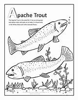 Trout Coloring Apache Pages Fish Theme Creek Wolf Fishing Pisces Quilt Template Cycles Gila Trouts Arizona Applique Atc Patterns Books sketch template