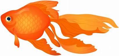 Goldfish Clipart Transparent Clip Fish Gold Cracker