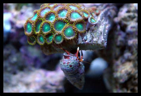 l aquarium d eau de mer webnature fr