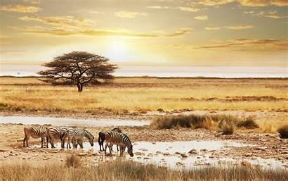 Safari Background Namibia Wallpapers Backgrounds Wallpapersafari Desktop