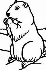 Groundhog Coloring Pages Woodchuck Printable Sheets Hog Ground Getdrawings Animal Rocks sketch template