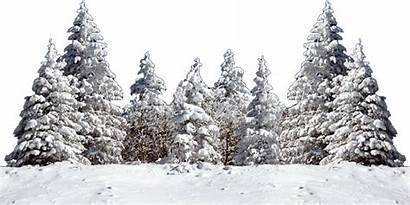 Snow Transparent Tree Christmas Background Winter Fir