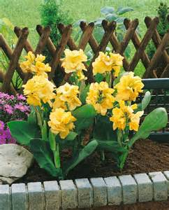 reblooming daylilies canna mix
