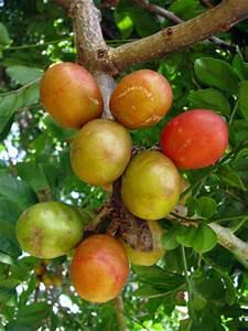 Mamones or Red Hog plum. The fruit itself looks and tastes ...