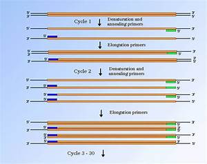 Diagram Of Pcr