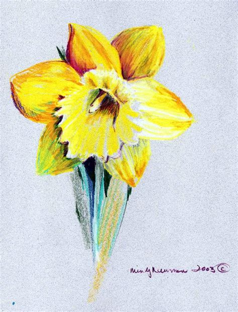 daffodil drawing  mindy newman