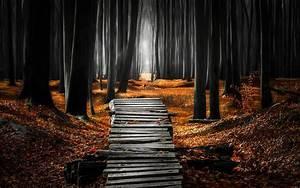 Wallpaper, Sunlight, Trees, Landscape, Forest, Fall, Leaves, Night, Nature, Wood, Morning, Mist