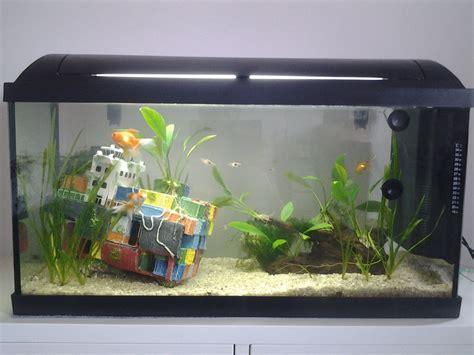 poisson dans un aquarium cohabitation pleco et poisson compatible avec crevette cherry