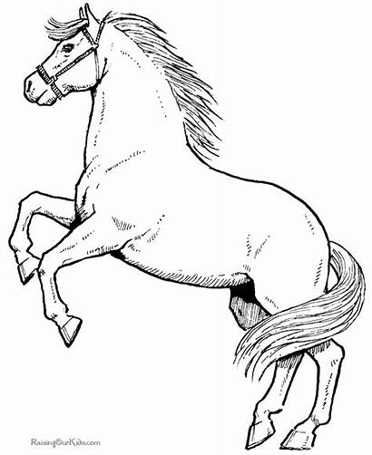 Coloring Horse Pages Cool Funny