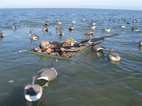 Curtain Blind Duck Hunting