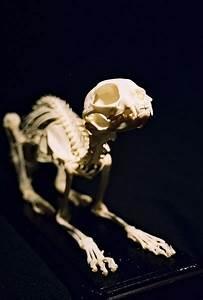 cat skeleton on Tumblr