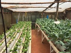 Kenya Goes Green: Entrepreneur Skips Soil, Uses Only Water ...
