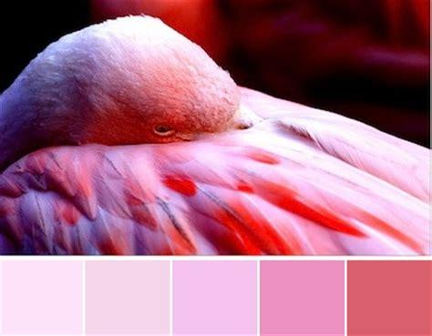 colored flamingos