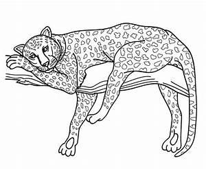 Dessin Jaguar Facile : en direct du serengeti coloriages pour enfants ~ Maxctalentgroup.com Avis de Voitures