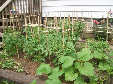 diy garden supports   type  plant