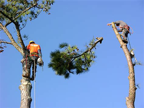 tree service mansfield tree trimming tree pruning tree removal for mansfield tx 76063
