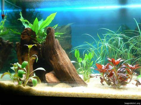 jai des oeufs dans mon aquarium mon 1er aquarium 180l de bonheur aquariophilie org