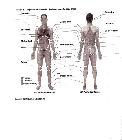 human body anatomical diagram driverlayer search engine
