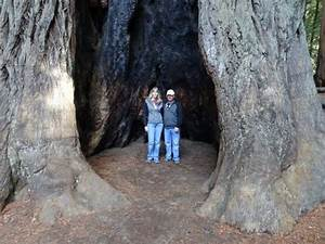 Sempervirens Falls - Picture of Big Basin Redwoods State ...